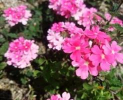 電車の見える 公園 咲く花