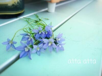 次男からお花のプレゼント
