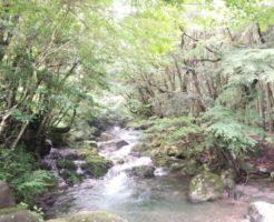 長崎県 大村市 キャンプ場
