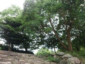 佐賀 七山 川遊び