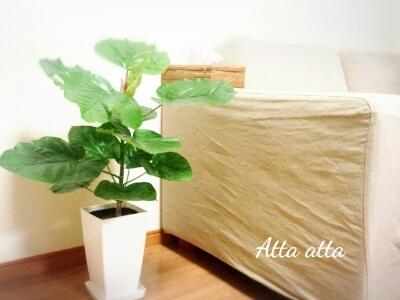 強い観葉植物 ウンベラータ