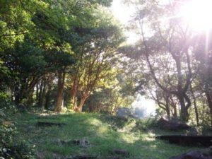 自然の光 緑が気持ちいい 空気も綺麗