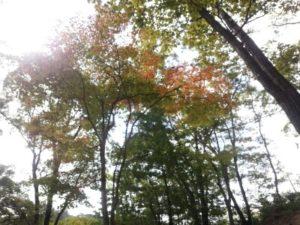 佐賀 北山 21世紀県民の森