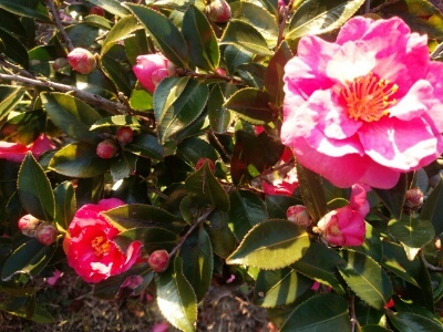 公園のお花 つぼみ