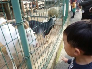 動物園 餌やり体験