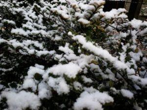 佐賀 年に一度の雪