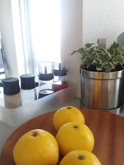 キッチン 調味料 観葉植物