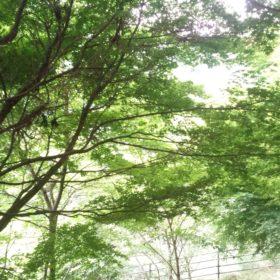 木 自然好き